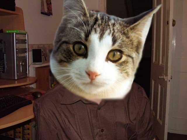 gay-cat.jpg